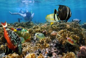 key west reef snorkeling florida best